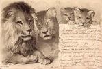 CPA CARTE EN RELIEF GAUFREE LION LIONS ** EMBOSSED CARD LION LIONS - Lions