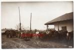 DOBRA-RUMÄNIEN-Photo-1Weltkrieg-Militaria-1WK.-Soldat-Pferd- - Roumanie