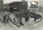 D04325 CARTE MAXIMUM CARD MC CM 1965 BELGIUM VARAN DE KOMODO CP ORIGINAL - Reptiles & Amphibians