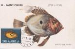 D04342 CARTE MAXIMUM CARD RR MC CM 1966 SAN MARINO ST. PIERRE CP ORIGINAL - Vissen
