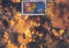 D04428 CARTE MAXIMUM CARD MC CM 1992 MONACO MARINE LIFE PARAZOANTHUS CP ORIGINAL - Maritiem Leven