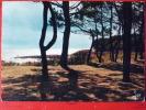 V7-29-finistere-beg-meil- Les Pins Sur Les Dunes-devant La Grande Plage- - Beg Meil