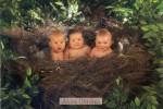Original Anne Geddes Postcard, Postkarte, Carte Postale, New, Babies, Child, Tree, Nest, Greenery - Children