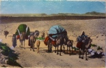 Famille Nomade En Transhumance - Argelia