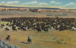 """U.S.A. """"In Old Wyoming"""" - A Roundup On The Range - Out On The Western Prairies In The Rockies - Etats-Unis"""