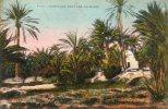 Afrique-Algérie - (Scènes & Types) Marabout Dans Les Palmiers (- Editions: E M T  N° 1105)*PRIX FIXE - Algérie