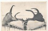 Musée Royal D´Histoire Naturelle De Bruxelles. Salle Des Squelettes Et Moulages. La Tête Du Grand Cerf D'Irlande. Nels - Elephants