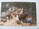 CARTOLINA KENIA TIGRI - Kenia