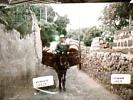 PANTELLERIA VIA ANIMATA AASINO TRASPORTO CESTE VB1981   DM2387 - Trapani