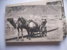 Jemen Yemen Aden Camel And Water Cart - Yemen