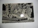 Anvers; Jardin Zoologique-les Joies De La Maternité,lionne Avec Lionceaux - Antwerpen