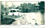 VICTORIA BC - Beacon Hill Park Scenic View - 1906 - Victoria