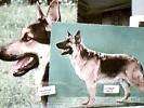 2 CARD CANE  CANI DOG PASTORE TEDESCO  CANE LUPO  N1965   DM2467 - Cani
