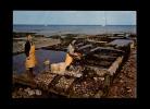 35 - CANCALE - Bassins D'expéditions à Terre - 43 - Ostréiculture - Cancale