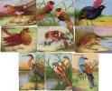 39 IMAGES DIVERSES  Animaux,Oiseaux  Etc... - Vieux Papiers