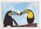 CALENDRIER 2000 - Oiseau Tropical TOUCAN - Calendar With TUCAN Bird - Kalender TUKAN Vogel - 05 - Kleinformat : 1991-00