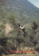 Carte Postale Maroc - Animaux - CHEVRE - GOAT Animal Postcard - ZIEGE Tier Postkarte - 04 - Animals