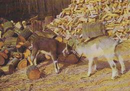 Carte Postale Allemagne - Animaux - CHEVRE / Combat De Chèvres - GOAT Animal Postcard - ZIEGE Tier Postkarte - 05 - Sonstige