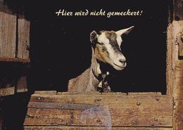Carte Postale Allemagne - Animaux - CHEVRE - GOAT Animal Postcard - ZIEGE Tier Postkarte - 06 - Animaux & Faune