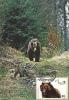 OURS,BEAR 1986,CM,MAXICARD,CARTES MAXIMUM - ROMANIA. - Ours
