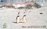 TARJETA DE JAPON DE VARIOS PINGUINOS (PENGUIN)  7 ELEVEN - Pinguini