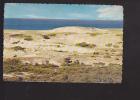 Cape Cod, Massachussetts, Dunes And Ocean - Cape Cod