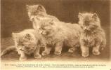Quatre Beaux Chats Bien Nourris Asbl Protectrice Des Animaux Marché Aux Beurre Gand - Katten