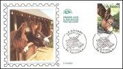 0468PJBaudet - 2000-2009