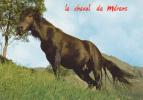 CPSM CHEVAL CHEVAUX De Merens Environs D' Ax Ariège Robustesse - Pferde