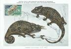 D05115 CARTE MAXIMUM CARD CM MC 1963 MAURETANIË CHAMELEON  CP MUSEE ORIGINAL - Reptiles & Amphibians