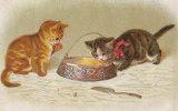 """Belle CPA Illustrée CHATS  Petit Gourmand  """" C' Est Trop Bon  """" En 1923 - Cats"""