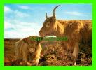 SCOTLAND - HIGHLAND COW AND CALF - J. ARTHUR DIXON - - Ecosse