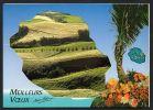 DF / TRIPTIQUE / LA REUNION / CHAMPS DE CANNE DANS L' EST / CARTE DE VOEUX - La Réunion