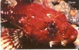 MAN-149 TARJETA DE LA ISLA DE MAN DE UN SCORPION FISH (ESCORPORA-PEZ) - Isla De Man
