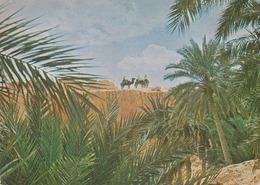 Carte Postale CP Tunisie / Oasis De Gafsa - ANIMAL - CHAMEAU DROMADAIRE - CAMEL & Palm Tree Postcard - KAMEL - 10 - Tierwelt & Fauna