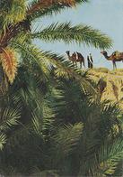 Carte Postale CP Tunisie / Oasis De Gabès - CHAMEAU DROMADAIRE - CAMEL Postcard - KAMEL Postkarte AK - 11 - Animales