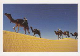 Carte Postale CP Tunisie / Roberrt Putinier - CHAMEAU DROMADAIRE - CAMEL Postcard - KAMEL Postkarte AK - 14 - Animals