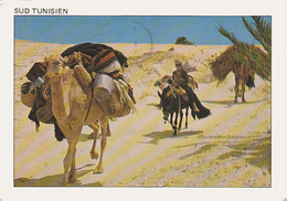 Carte Postale CP Tunisie - CHAMEAU DROMADAIRE & ANE - CAMEL & DONKEY Post Card - KAMEL Postkarte AK - 19 - Burros