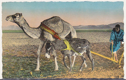 Carte Postale CP - CHAMEAU & ANE - CAMEL & DONKEY Postcard - KAMEL & ESEL Postkarte AK - 22 - Donkeys
