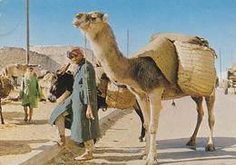 Carte Postale CP - ANIMAL - CHAMEAU & ANE - CAMEL & DONKEY Postcard - KAMEL & ESEL Postkarte AK - 23 - Ezels