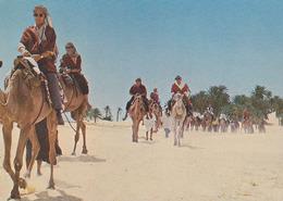 Carte Postale CP - CHAMEAU / Excursion Au Sahara - CAMEL Postcard - KAMEL Postkarte AK - 24 - Animals