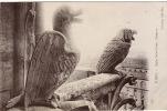 75 PARIS  Notre Dame  Chimere Oiseau - Notre Dame De Paris
