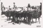 LES SAINTES MARIE DE LA MER (13) CARTE PHOTO DE LA FETE 1938 (GUARDIANS ET TOROS BEAU PAN ANIME) - Saintes Maries De La Mer