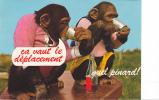 19263 Ca Vaut Déplacement, Quel Pinard !  Signy Chatel (France) Zoo Gué Gallet 3A000011cim - Singe Animaux Humoristiques
