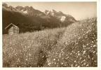 Bergwiese (flims - GR Grisons