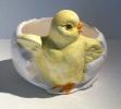 Présentoir Dragées Poussin  - Kuiken  - Chicken - DI142 - Céramiques
