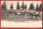 K947 Pâturages Au Sonnenberg Sur St-Imier,Troupeau Chevaux Des Franches-Montagnes.Cachet 1910 Vers USA.Burgy 2010 - BE Berne