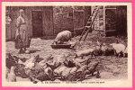 CPA COCHON - 19 - En Limousin , Une Ferme - Cochon - France