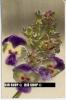 """Um 1910/1920 Ansichtskarte, Feldpost """" Blumen"""" Mit Stempel - Botanik"""