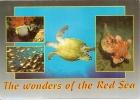 Les Merveilles De La Mer Rouge - Egypte